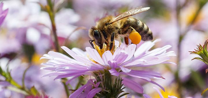 polenizacao