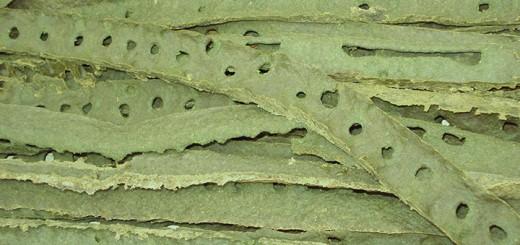 propolis-medicina