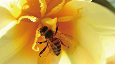 Projeto Brazil Let's Bee participa da feira Tokyo Health 2015