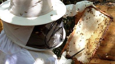 Evento sobre manejo do mel reúne chef e pesquisadora dos EUA